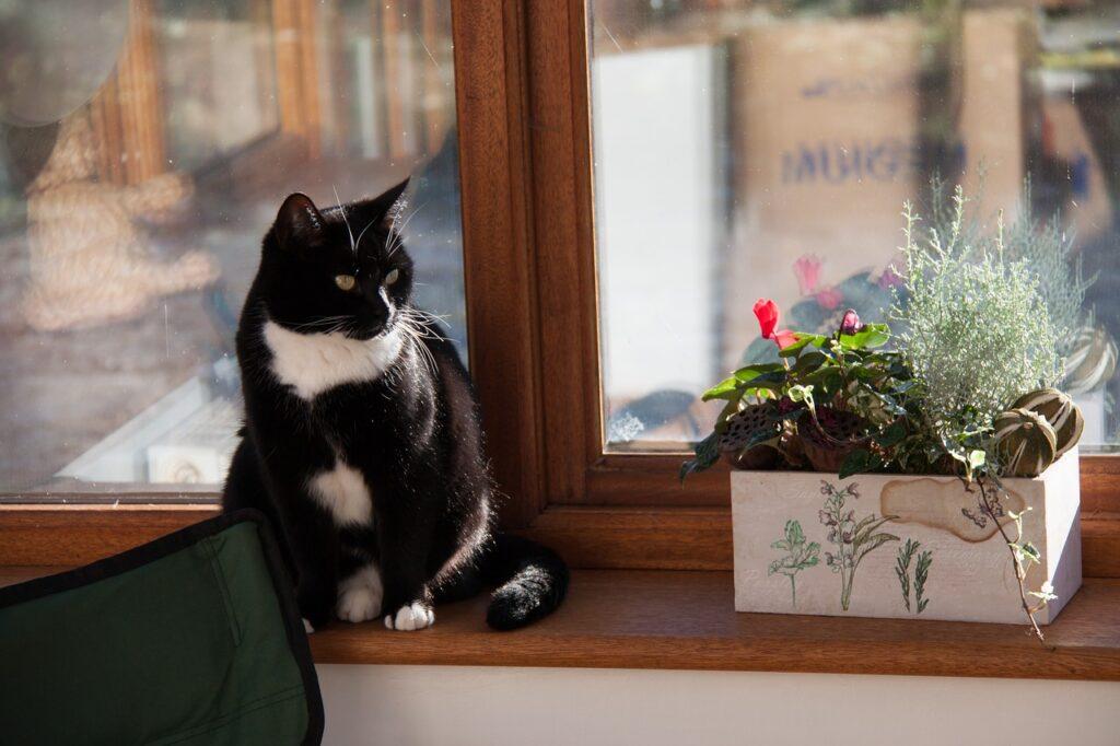 Auf einer Fensterbank innen aus braunem Holz steht ein kleiner Blumentopf. Daneben sitzt eine schwarz-weiße Katze.