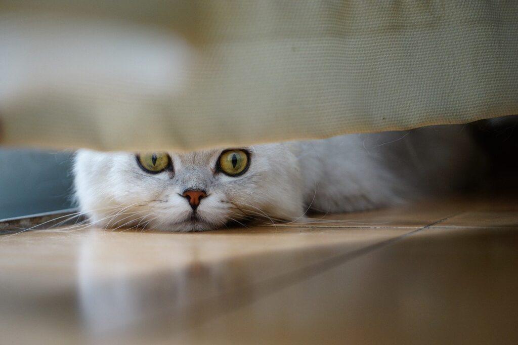 Eine Katze liegt auf dem Boden und schaut unter einem Möbelstück hervor