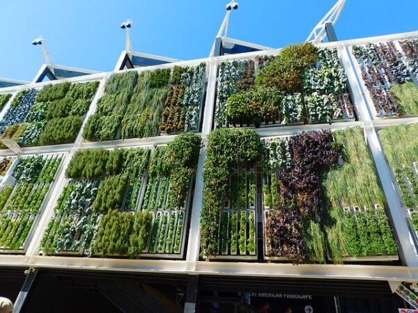 An einer Häuserwand befindet sich vertikal eine wandgebundene Fasadenbegrünung.