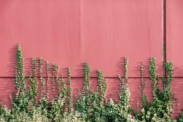 An einer roten Hauswand wachsen grüne Pflänzchen empor.